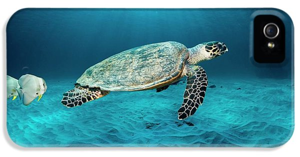 Green Turtle And Circular Spadefish IPhone 5 Case by Georgette Douwma