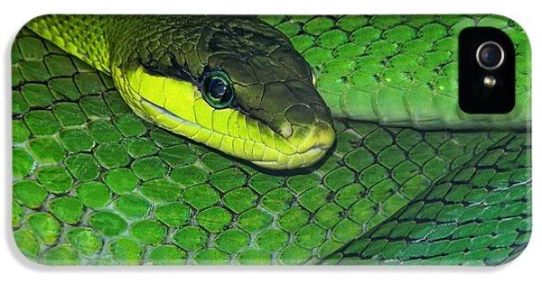 Green Viper IPhone 5 Case