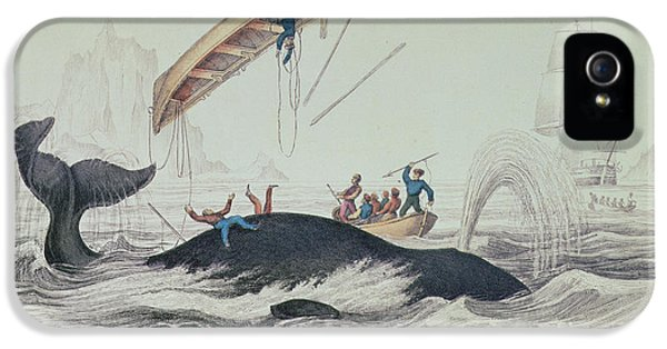 Greenland Whale Book Illustration Engraved By William Home Lizars  IPhone 5 Case by James Stewart