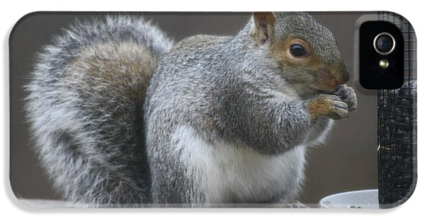 Grey Squirrel At Bird Feeder 3 IPhone 5 Case by Michael Collins