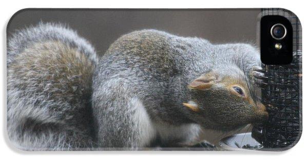 Grey Squirrel At Bird Feeder 6 IPhone 5 Case by Michael Collins
