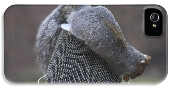 Grey Squirrel On Hanging Feeder 1 IPhone 5 Case by Michael Collins