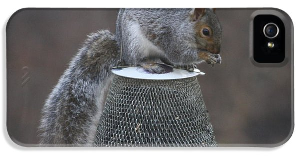 Grey Squirrel On Hanging Feeder 8 IPhone 5 Case by Michael Collins