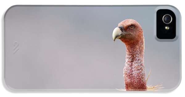 Griffon Vulture IPhone 5 Case by Dr P. Marazzi