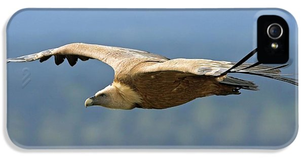 Griffon Vulture In Flight IPhone 5 Case by Bildagentur-online/mcphoto-schaef