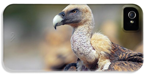 Griffon Vulture IPhone 5 Case by Nicolas Reusens