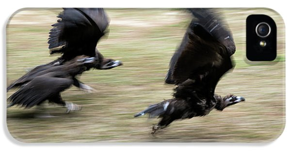 Griffon Vultures Taking Off IPhone 5 Case by Pan Xunbin