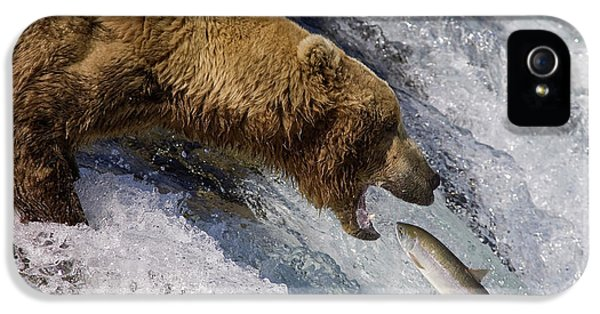 Grizzly Bear Catching Salmon IPhone 5 Case