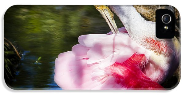 Preening Spoonbill IPhone 5 Case by Mark Andrew Thomas