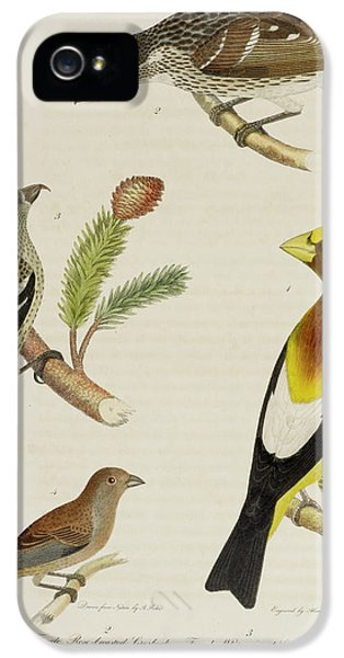 Grosbeak And Crossbill IPhone 5 Case by British Library