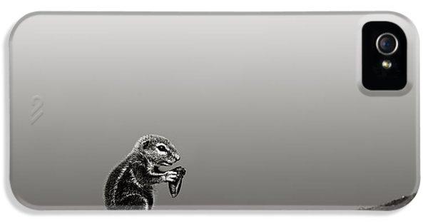 Squirrel iPhone 5 Case - Ground Squirrel by Johan Swanepoel