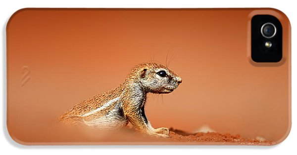 Ground Squirrel On Red Desert Sand IPhone 5 Case by Johan Swanepoel
