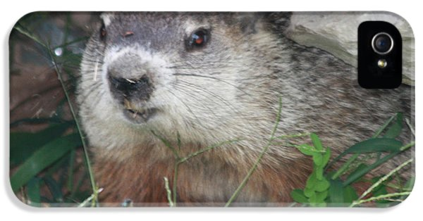 Groundhog Hiding In His Cave IPhone 5 Case