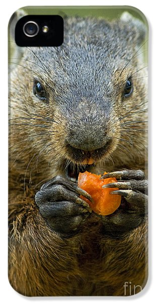 Groundhogs Favorite Snack IPhone 5 Case