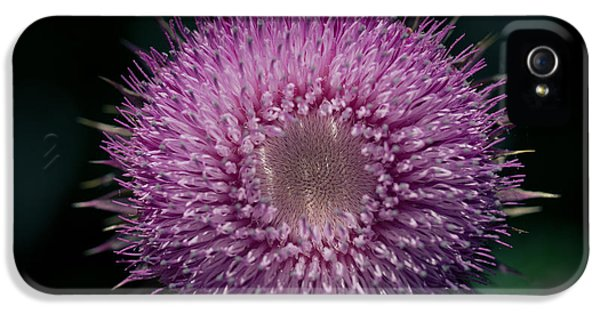 Gynormous Thistle IPhone 5 Case