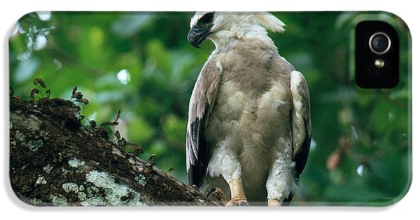 Harpy Eagle iPhone 5 Case - Harpy Eagle by Art Wolfe