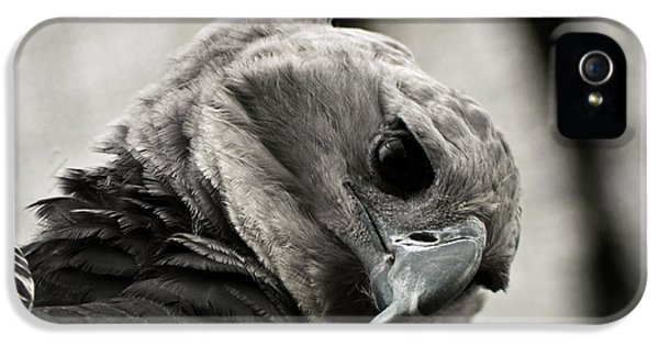 Harpy Eagle iPhone 5 Case - Harpy Eagle Closeup by Jess Kraft