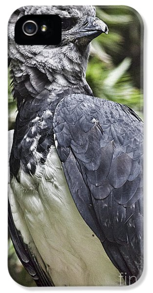 Harpy Eagle iPhone 5 Case - Harpy Eagle by Douglas Barnard