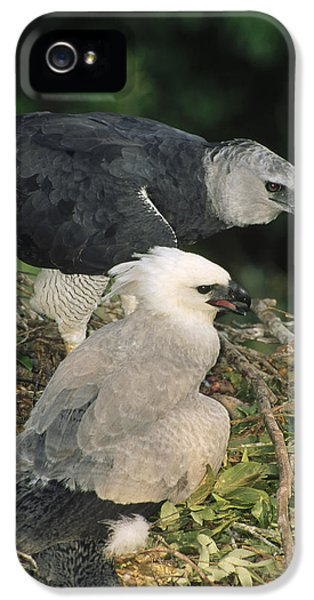 Harpy Eagle iPhone 5 Case - Harpy Eagle Female And Chick Amazonian by Tui De Roy