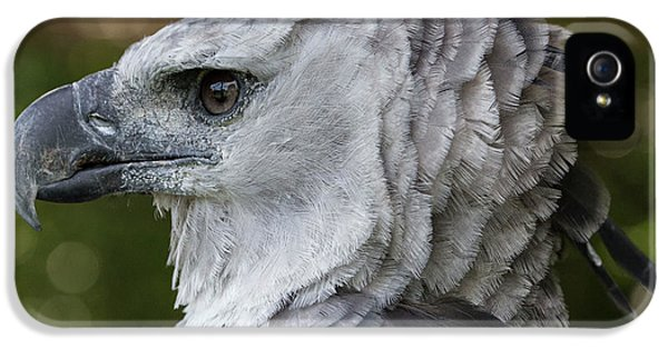 Harpy Eagle iPhone 5 Case - Harpy Eagle, Harpia Harpyja by Jon G. Fuller