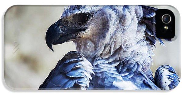 Harpy Eagle Harpia Harpyja IPhone 5 Case by Leonardo Mer�on