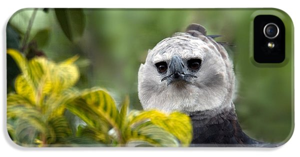 Harpy Eagle iPhone 5 Case - Harpy Eagle Harpia Harpyja by Mark Newman