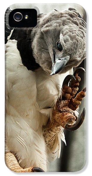 Harpy Eagle iPhone 5 Case - Harpy Eagle by Jess Kraft