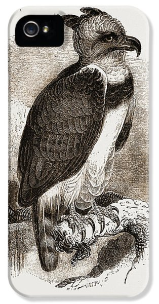 Harpy Eagle iPhone 5 Case - Harpy Eagle by Litz Collection