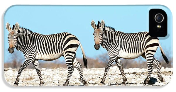 Hartmann's Mountain Zebra IPhone 5 Case by Tony Camacho