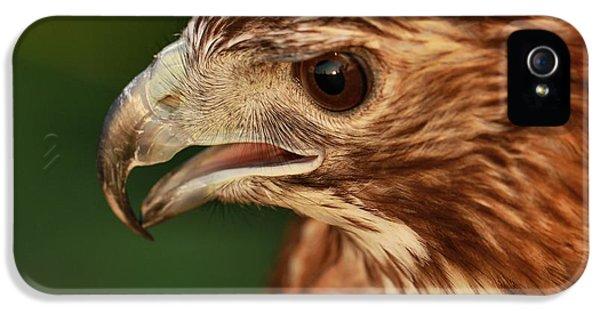 Hawk Eye IPhone 5 Case