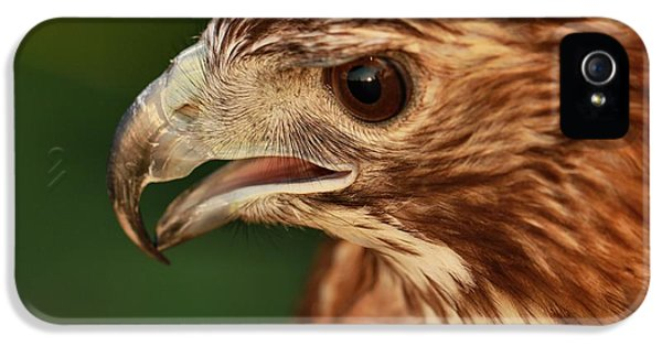 Hawk Eye IPhone 5 Case by Dan Sproul