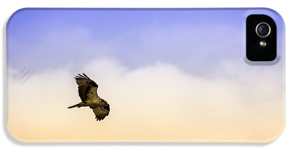 Osprey iPhone 5 Case - Hawk Over Head by Marvin Spates