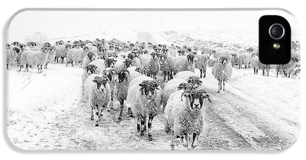 Sheep iPhone 5 Case - Heading For Home by Janet Burdon