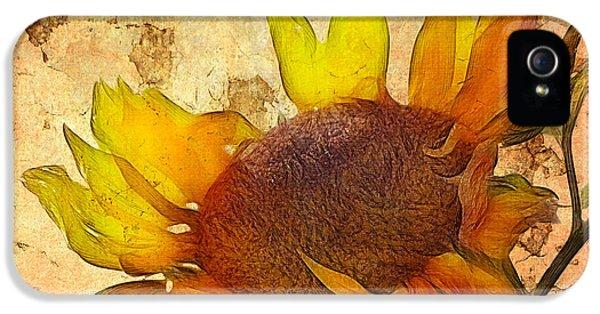 Sunflower iPhone 5 Case - Helianthus by John Edwards