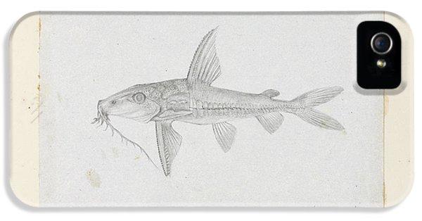 Catfish iPhone 5 Case - Hemidoras Stenopeltis by Natural History Museum, London
