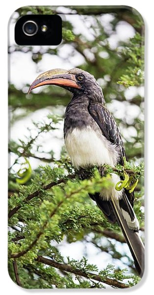 Hemprichs's Hornbill (tockus Hemprichii) IPhone 5 Case by Peter J. Raymond