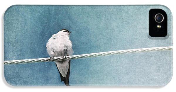 Swallow iPhone 5 Case - Herald Of Spring by Priska Wettstein