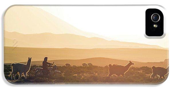 Llama iPhone 5 Case - Herd Of Llamas Lama Glama In A Desert by Panoramic Images