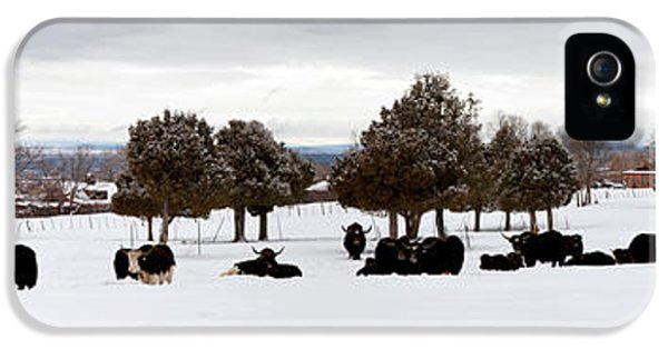 Herd Of Yaks Bos Grunniens On Snow IPhone 5 Case by Panoramic Images