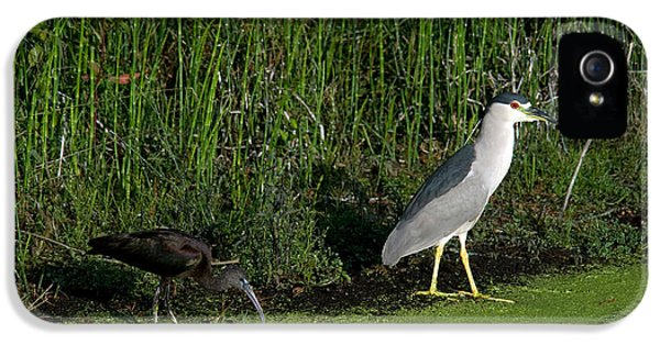 Heron And Ibis IPhone 5 Case by Mark Newman