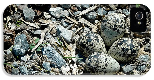 Killdeer iPhone 5 Case - Hidden In Plain Sight by Rhonda Barrett