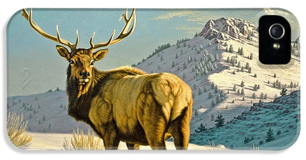 Bull iPhone 5 Case - High Country Bull by Paul Krapf