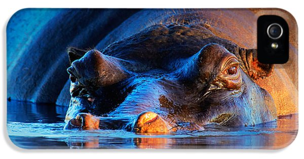 Hippopotamus  At Sunset IPhone 5 Case by Johan Swanepoel