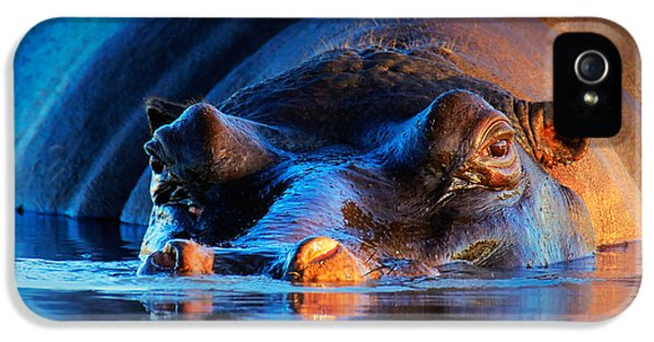 Hippopotamus  At Sunset IPhone 5 Case by Johan Swanepoel