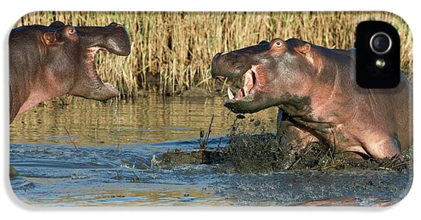 Hippopotamus Confrontation IPhone 5 Case by Tony Camacho