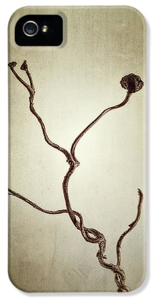 Holdfast Rootlet IPhone 5 Case by Scott Norris