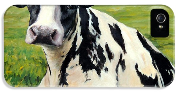 Cow iPhone 5 Case - Holstein Cow Relaxing In Field by Dottie Dracos