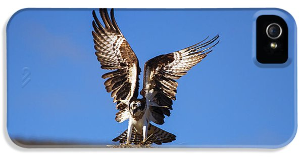 Osprey iPhone 5 Case - Homebuilder by Mike  Dawson