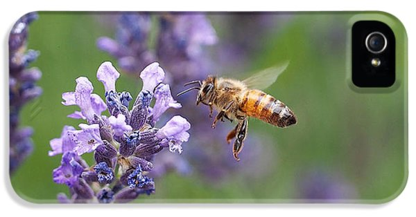 Honey Bee And Lavender IPhone 5 Case by Rona Black
