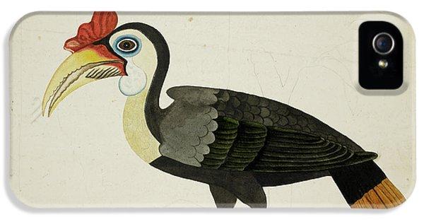 Hornbill iPhone 5 Case - Hornbill by British Library